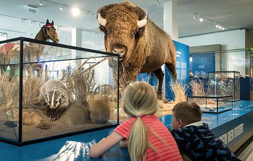 Ein Junge und ein Mädchen schauen sich den Bison in der Amerika-Ausstellung an.