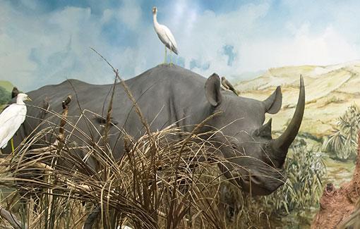 Nashorn-Diorama mit Vögeln