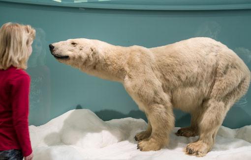 Mädchen steht vor einem Eisbären