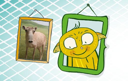 Zwei Bilderrahmen: aus einem blickt ein Maki heraus, im anderen eine Saiga-Antilope.