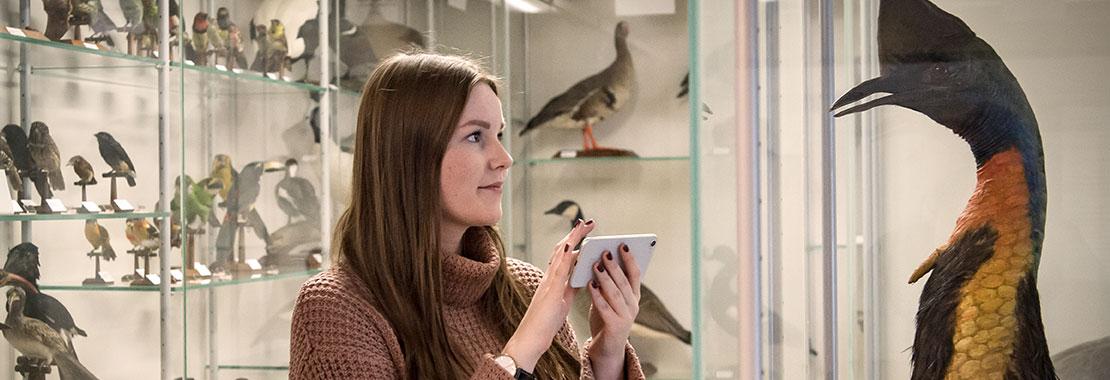 Besucherin mit Smartphone vor einem präparierten Vogel im Schaumagazin