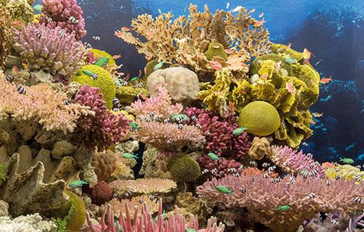 Ein Korallenriff mit vielfältigen Fischen