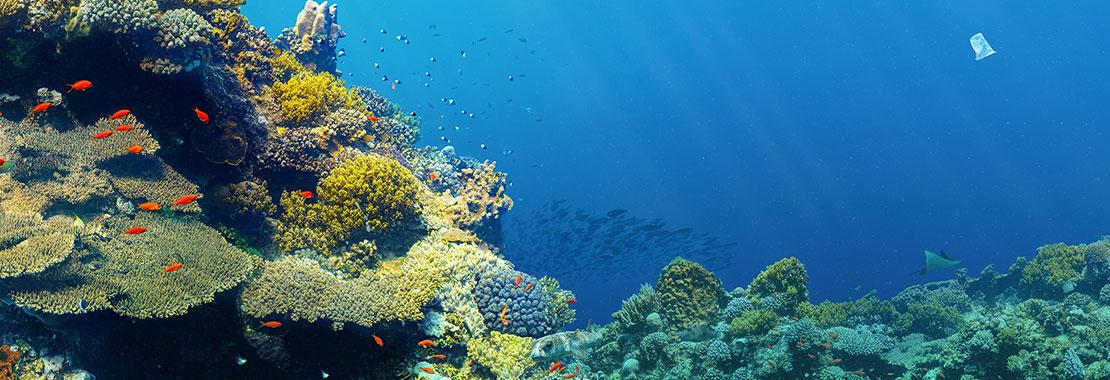 Unterwasserfoto von Riff und Fischschwarm