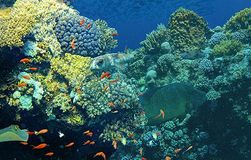 Unterwasserfoto von Korallenriff