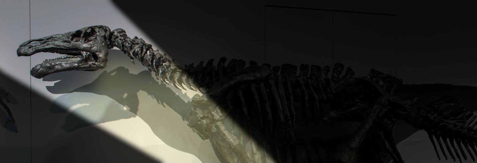 Ein Donosaurierskelett, teilweise von einem Lichtstrahl angeleuchtet