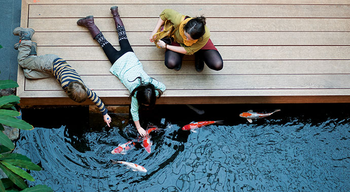 Blick von oben auf einen Teich mit Kois. Am Teich befindet sich ein Steg mit einer Frau und zwei Schulkindern.