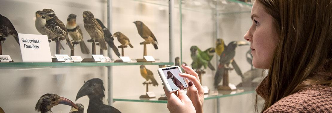 Besucherin mit Mediaguide im Schaumagazin vor Vitrine mit Vögeln